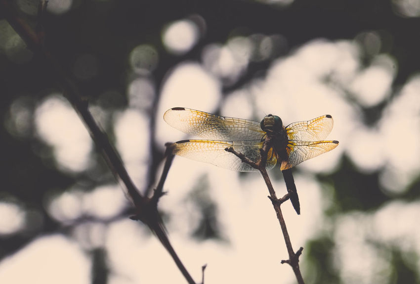 Close-up Day Dragonflies Dragonfly Fragile Insect Nature No People Outdoors Perching Simple Beauty