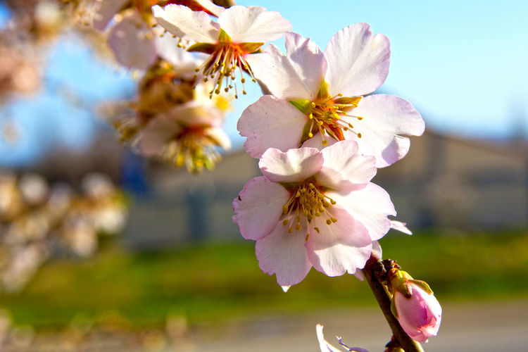 Beauty In Nature Blooming Blossom Botany Close-up Flower Freshness In Bloom Nature No People Pink Color Showcase April Nature's Diversities