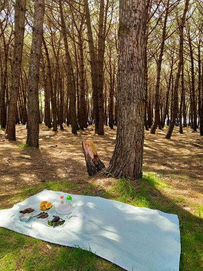 Quiet picnic in