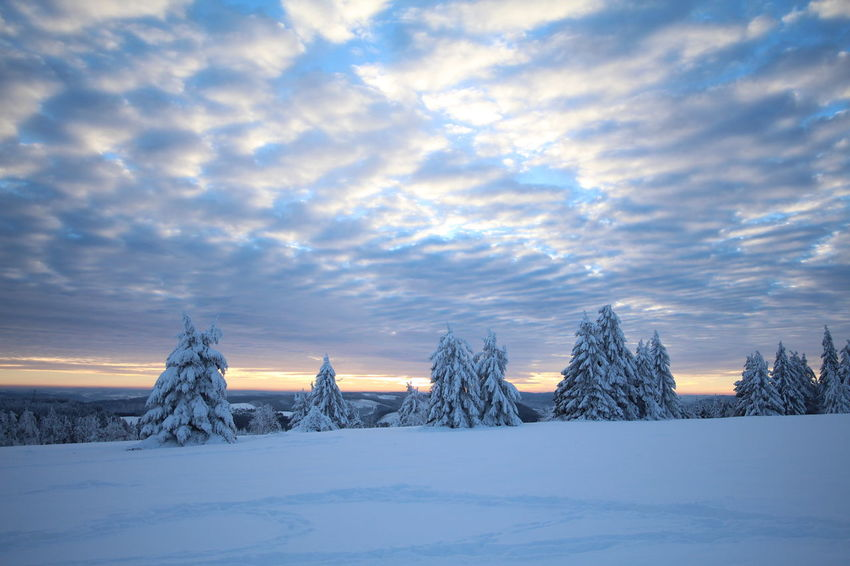 Winter Snow Cold Temperature Dramatic Sky Frozen Landscape No People Tree Beauty In Nature Cloud - Sky Scenics Business Finance And Industry Polar Climate Sky Outdoors Day Frozen Nature Winter_collection Sauerland Winterwonderland Germany Tree Wintertime Snowing Ice The Great Outdoors - 2017 EyeEm Awards