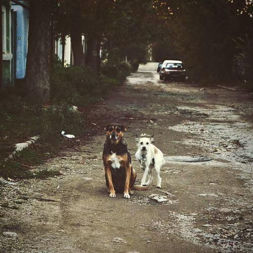 Car Street Road Outdoors No People Day Tree Nature Animal Themes Domestic Animals Dogs Wild Dogs