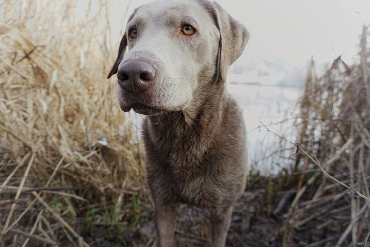 Close-up of dog standing on field by lake