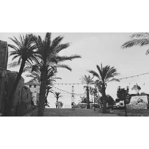 The old city. Jaffa Palms Jonahwashere