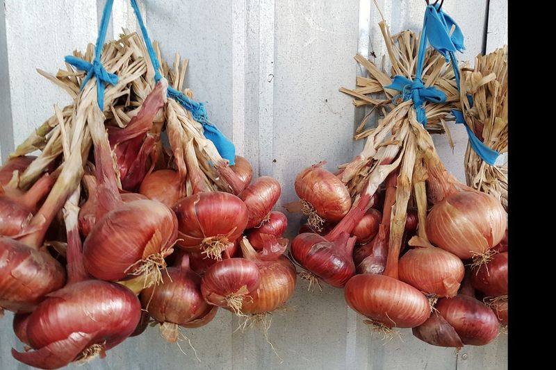 red onions hanging Spanish Onions Red Onions Organic Food Homegrown Produce Onion Vegetable Vegetarian Close-up Food And Drink Plant Bulb Tied Up Tied Knot Raw Food Raw Bundle Rope Tied