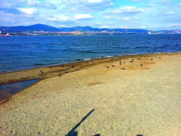 Turkey Degirmendere Seaside Sea And Sky Nature_collection End Of Summer Seagulls Last Days Of The Summer Beach