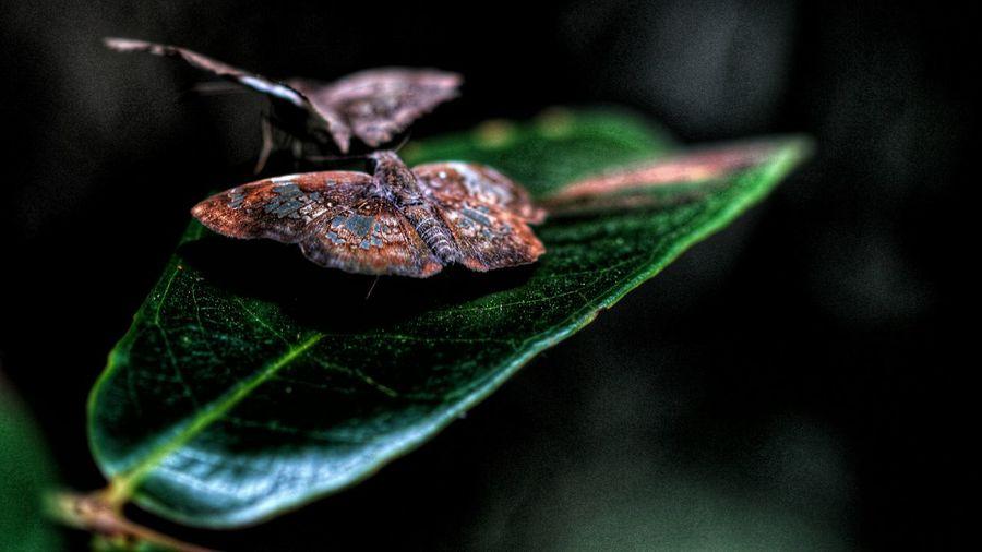 Close-Up Of Moths On Leaf