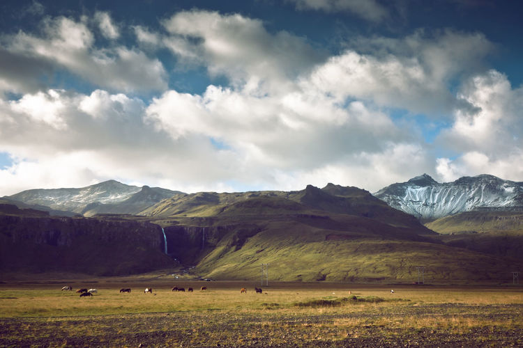 Animal Themes Beauty In Nature Cloud - Sky Clouds Day Domestic Animals Glacier Iceland Landscape Livestock Mammal Mountain Mountain Range Mountains Nature Outdoors Sky