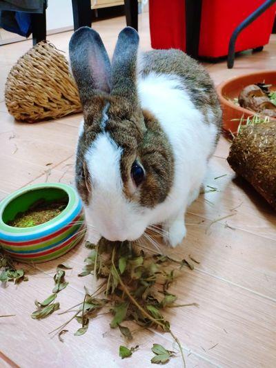 kungfu rabbit Animal Cony Lovely Bunny Bunny  Rabbit Pets Rabbit - Animal Easter Bunny
