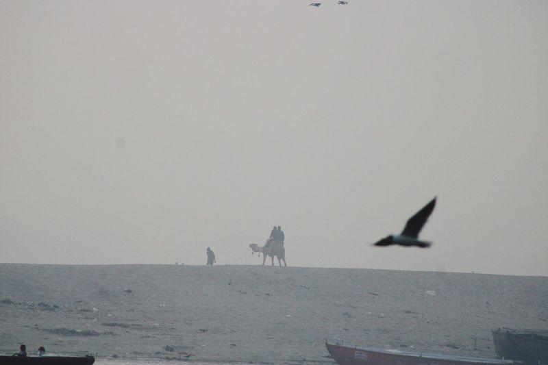 Far bank of the Ganges, Animal Themes Animal Sea Nature Water Vertebrate Bird Silhouette Incidental People Nautical Vessel