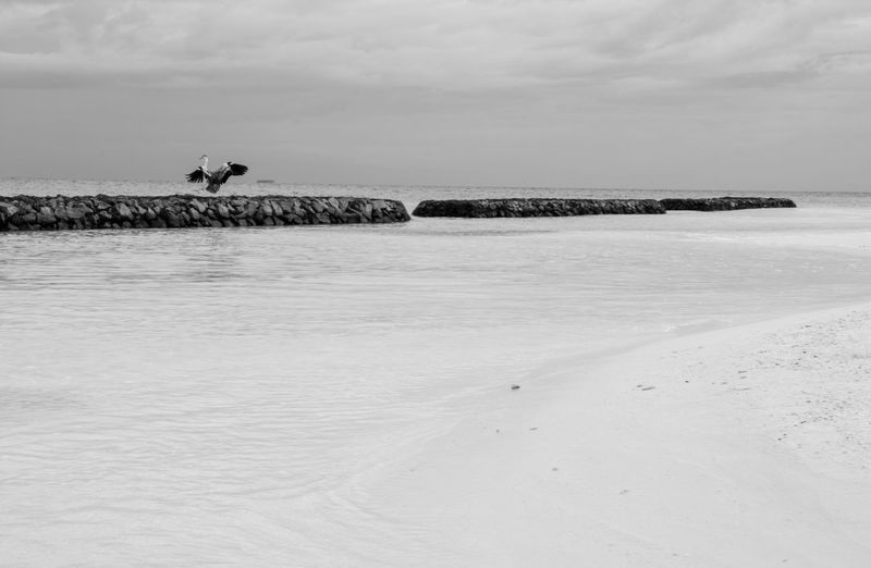 Maldives Maldives Islands Maldivesphotography Maldives_collection Nature Maldiveslovers Maldive Island Water Resort Bird Bird Photography Birdcollection Blackandwhite Black & White Black And White Photography Black&white Black And White Collection  Blackwhite Photography Fotografia Fotografie FotoDelDia Fotomaldive