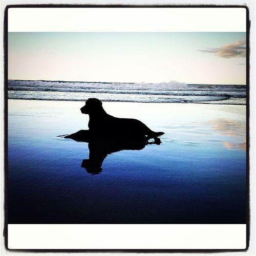 Doble Timba Enjoying The Sun Relaxing