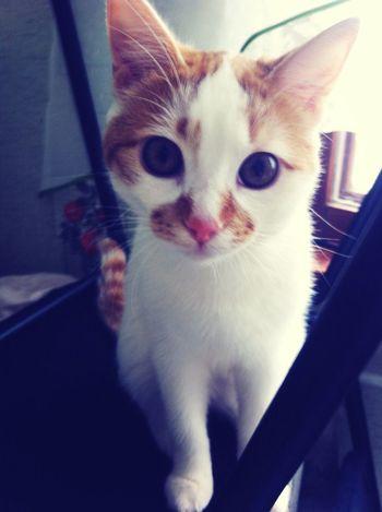 My cat❤️ my nice cat)))) Cat♡ Cat