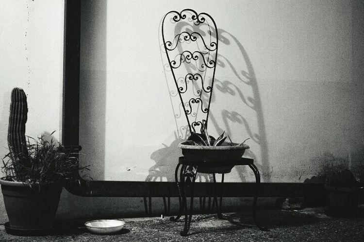 Chair Black And White Black And White Photography Composition Black & White Photography Light And Shadow Cactus Nightlife Night