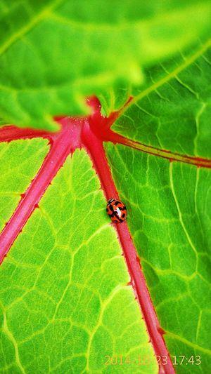 Ladybird! 1st Try First Eyeem Photo