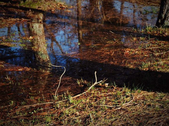 Nature Reflection Wood