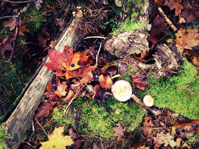 High angle view of mushrooms on field in forest
