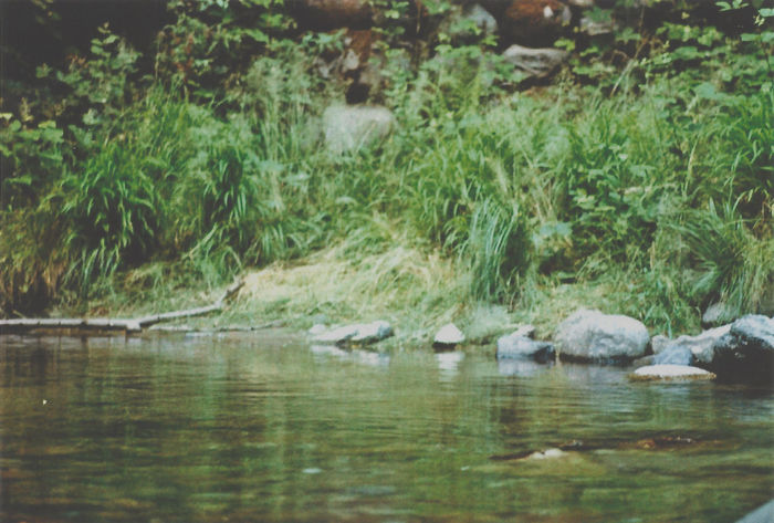 Beauty In Nature Bird Bush Close-up Day Expired Film Grass Nature No People Outdoors Reflection River Riverbank Riverside Rocks Rocks And Water Swimming Tranquility Water Sommergefühle