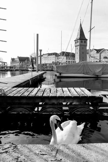 Swan by pier at jetty