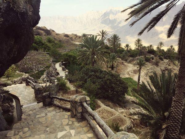 Oman Oasis Wäkan Palm Tree
