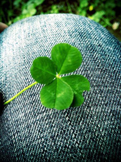 四つ葉 Four‐leaf Clover の 花言葉 Language Of Flowers は、 幸運 Goodluck わたしのものになって Be Mine だって。どきっとしちゃう。w