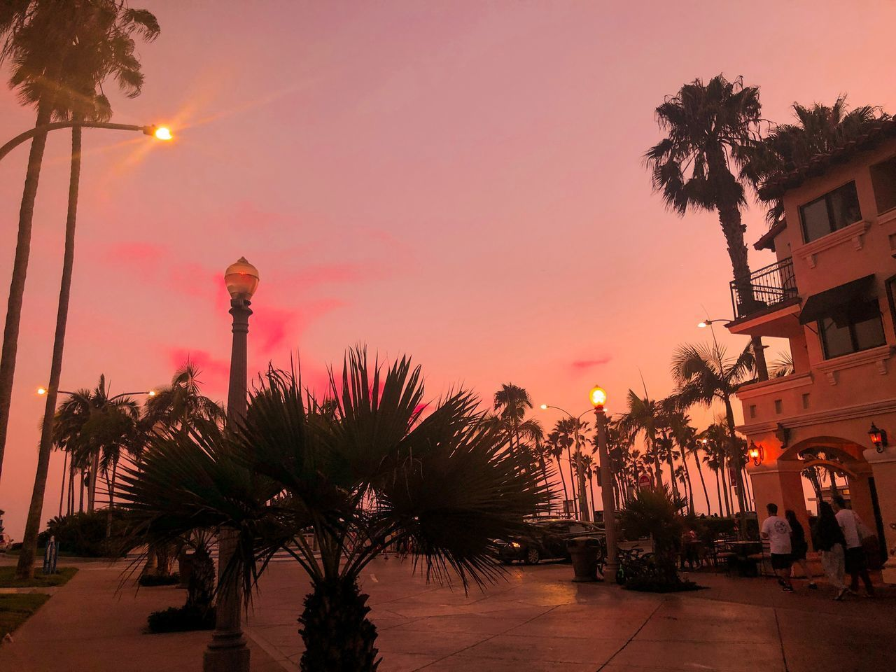 PALM TREES AND PLANTS AGAINST SKY AT SUNSET