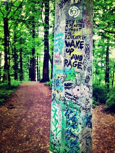 TreePorn IPhoneArtism EyeEm Nature Lover NEM Derelict