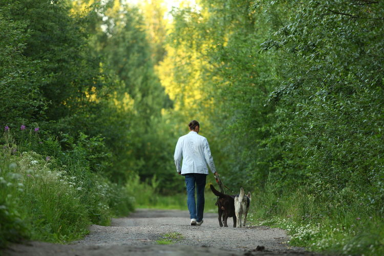 Rear view of man with dog walking in park