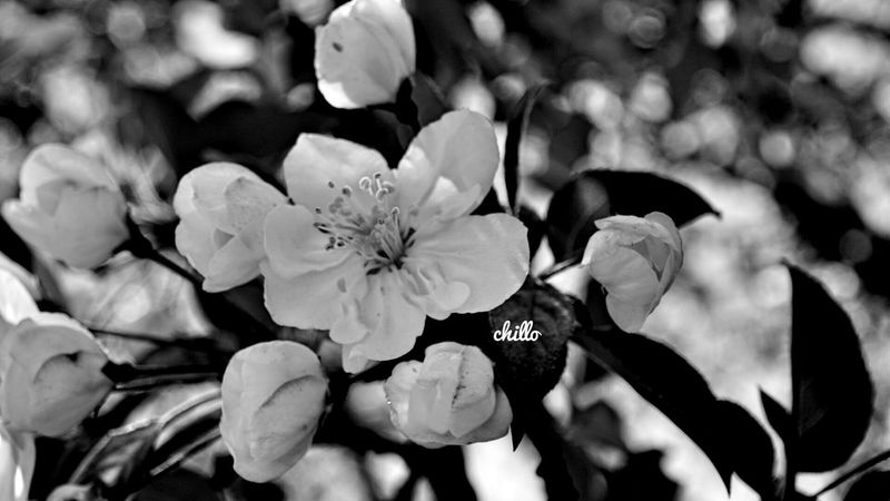 Flowerporn Flowers Marco_collection Marco Blackandwhite Photography Monochrome Sony A6000 Eye4photography  EyeEm Nature Lover Macro Photography
