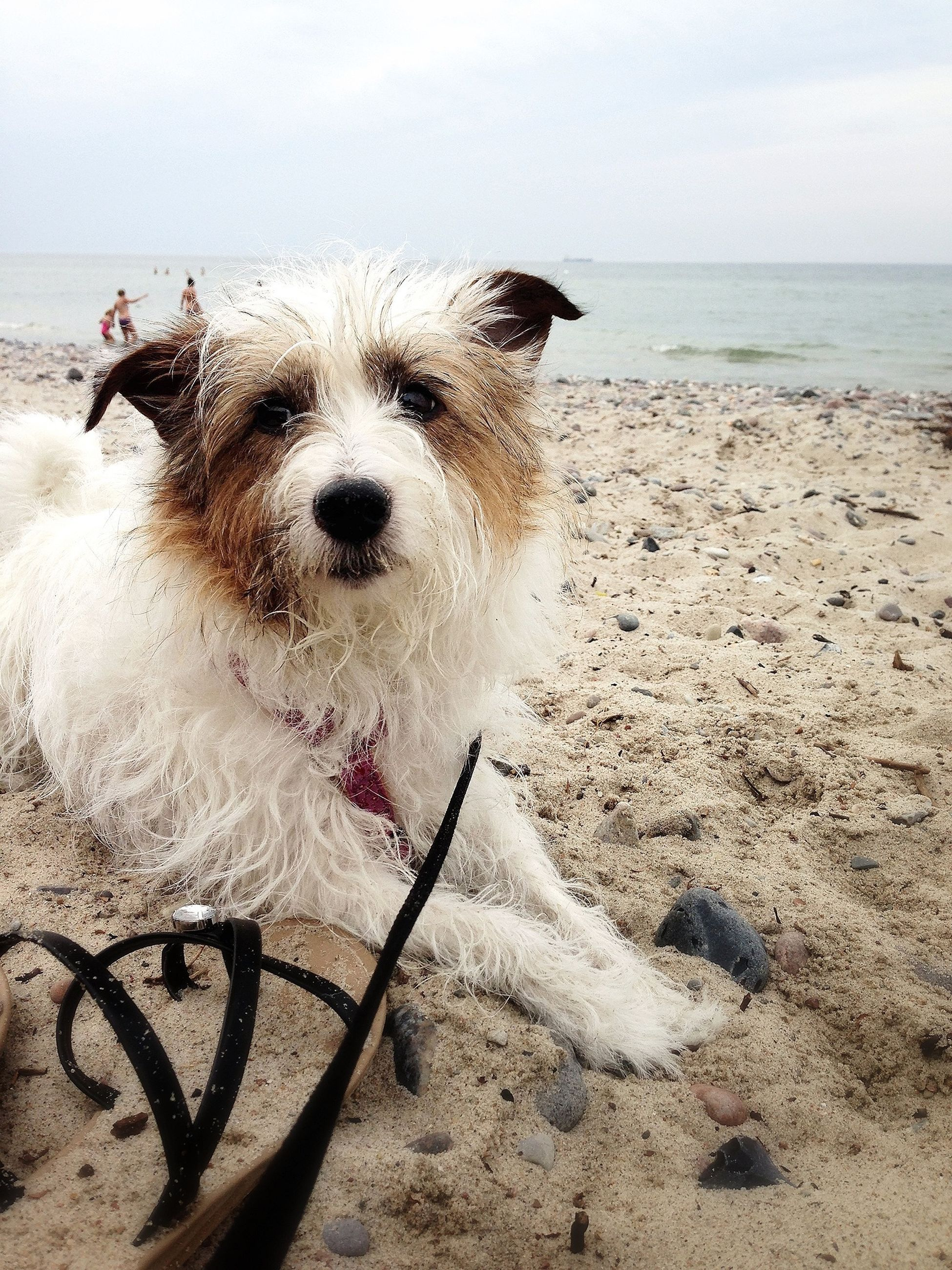 beach, sand, sea, one animal, animal themes, shore, horizon over water, domestic animals, mammal, dog, pets, sky, nature, water, day, outdoors, beauty in nature, full length, relaxation, tranquility