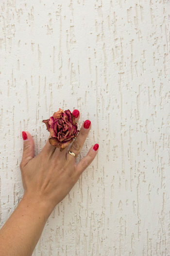 dried rose in hands Human Hand Hand Flower One Person Human Body Part Flowering Plant Plant Holding Real People Freshness Women Lifestyles Beauty In Nature Fragility Indoors  Adult Vulnerability  Wall - Building Feature Close-up Body Part Finger Flower Head Nail