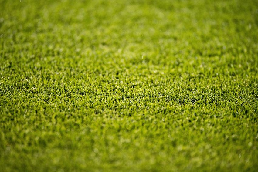 Close up of the grass in a soccer field. Backgrounds Close-up Day Field Full Frame Grass Green Color Growth Land Nature No People Outdoors Plant Playing Field Selective Focus Soccer Soccer Field Sport Team Sport Textured  Turf
