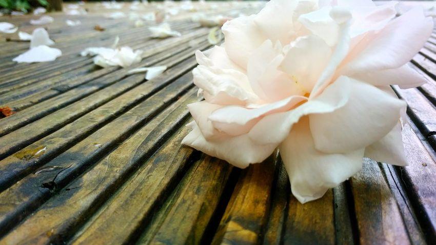 Roses, Flowers, Nature, Garden, Bouquet, Love, Rose🌹 Rose - Flower Rosenblätter Rosen Rosenzauber Outdoors Nature Wood - Material No People Holz EyeEm Selects Sommergefühle
