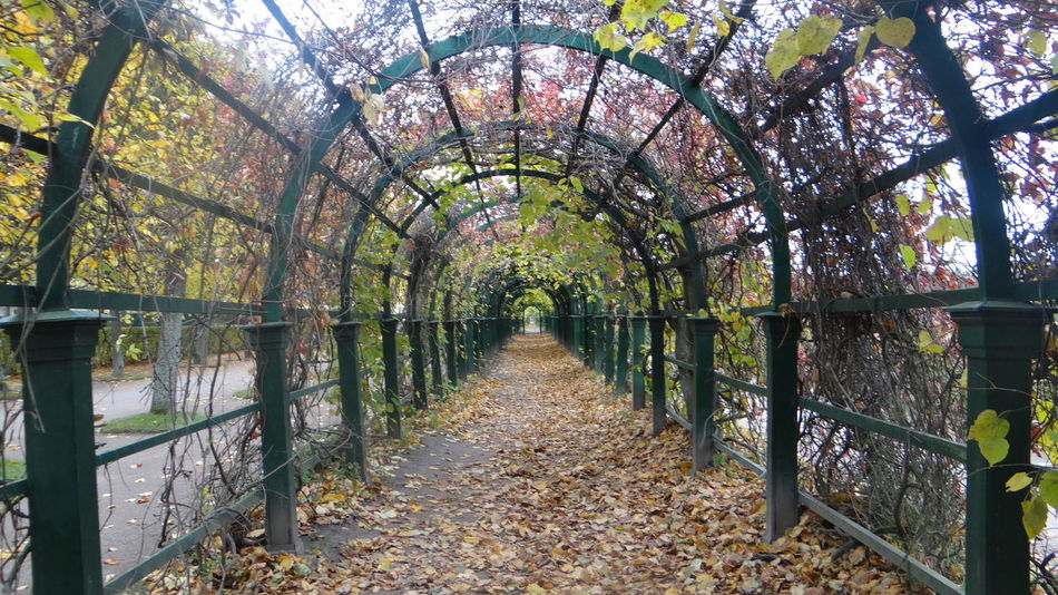 Arch Archway Beauty In Nature Branch Day Diminishing Perspective Growth In A Row Long Nature Outdoors Pathway Pergola Scenics The Way Forward Tourism Tranquil Scene Tranquility Travel Destinations Tree Tree Canopy  Tree Trunk Treelined Walkway WoodLand