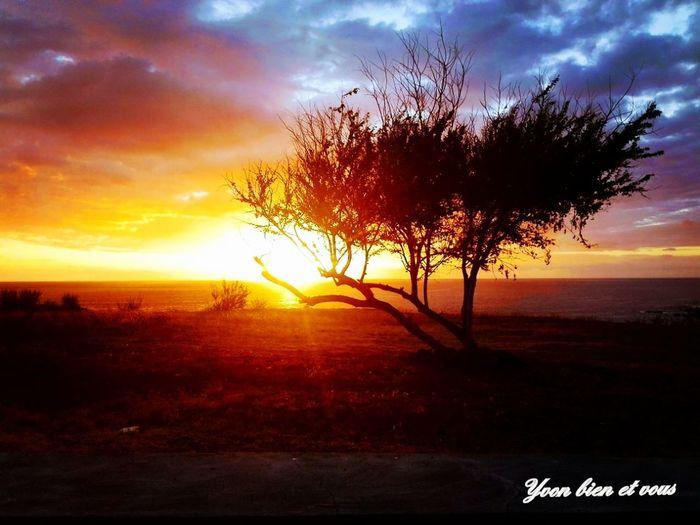 sunset ile de la réunion Sunset Yvonbien Iles  Isle RedSky Hollidays Sun Sky Colors Sunset Tree Landscape Nature Cloud - Sky Silhouette Sky Scenics Sun Beauty In Nature Outdoors Sunlight No People Tranquility