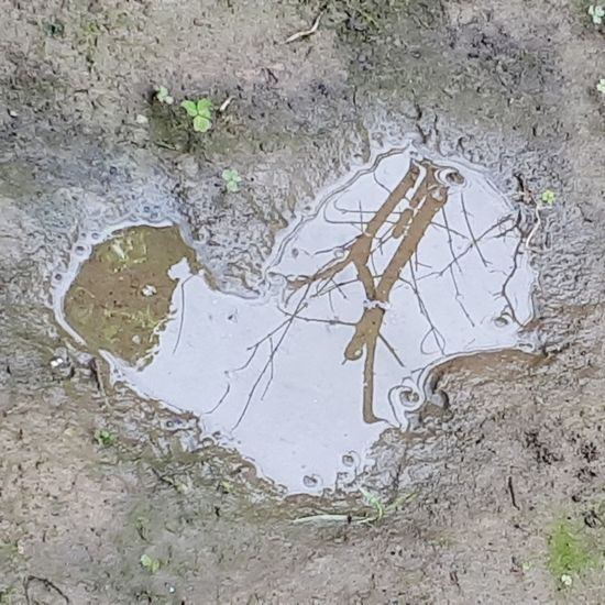 Reflection Heart ❤ Water Puddle
