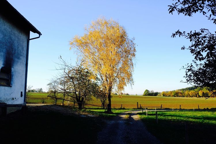 Tree Landscape Nature Field Tranquil Scene Clear Sky Land Autumn Rural Scene Scenics - Nature No People Environment