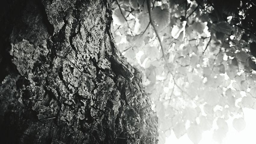 Tree Trees Leaf Leafs Blackandwhite