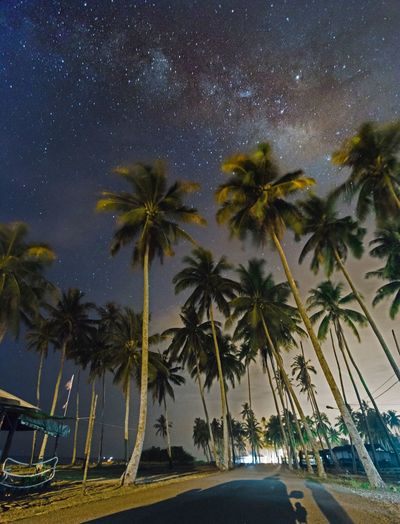 Milky way scene over coconut trees at Jambu Bongkok, Terengganu Nightphotography Night Milky Way Palm Tree Tree Sky No People Night Outdoors Road Blue Tree Trunk Star - Space Scenics Space Nature Galaxy