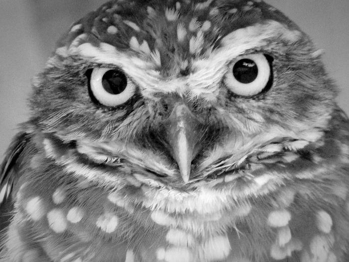 Bird Eyeball Portrait Looking At Camera Close-up Eagle - Bird Parrot Hawk Animal Eye Gold And Blue Macaw Falcon - Bird Yellow Eyes Owl Budgerigar Macaw Bird Of Prey Hawk - Bird Scarlet Macaw Beak Cockatoo Bald Eagle Parakeet Spread Wings Rainbow Lorikeet Vulture Eagle Hornbill Feather  Perching Pelican