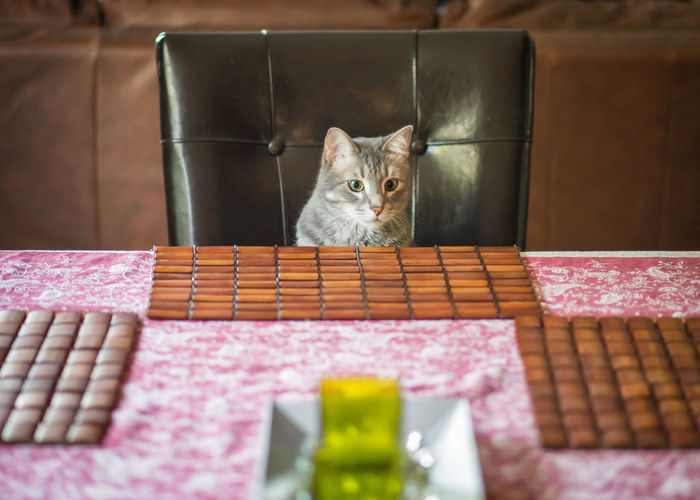 High Angle View Of Cat Sitting On Chair At Dining Table