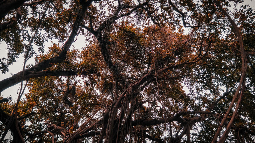 Gettyimages EyeEm Nature Lover EyeEm Selects EyeEm Best Shots Tree Branch Backgrounds Full Frame Clear Sky Forest Sky Close-up