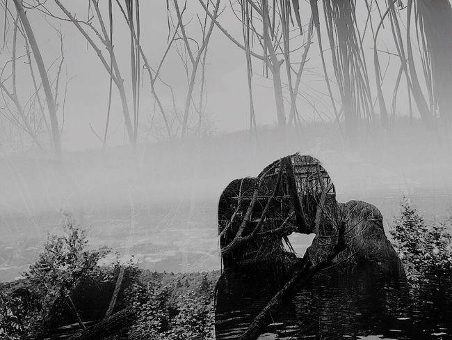 Freedom Anıyakala Iphone6 Darling Sevgilim Love Sonbaharyaprakları IPhoneography Landscape Vintage My Love Nature_collection Blackandwhite Kiss MyDarling  EyeEm Best Shots - Black + White
