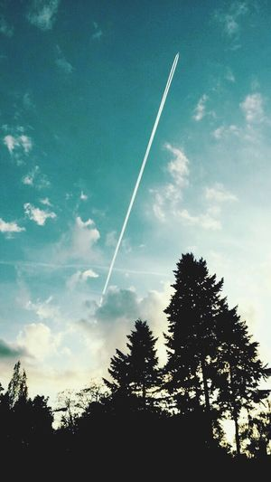 Vapor Trail Tree Contrail Silhouette Nature Sky Low Angle View No People Beauty In Nature Outdoors Day EyeEmNewHere
