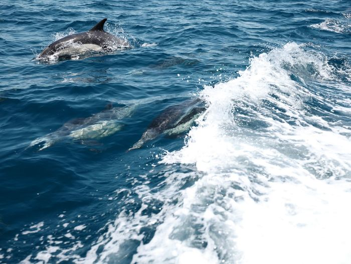 Have fun Dophins Sea Water Animal Animal Themes Animals In The Wild Animal Wildlife One Animal No People Beauty In Nature Swimming
