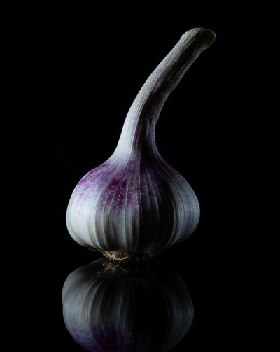 Close-up of white bell against black background