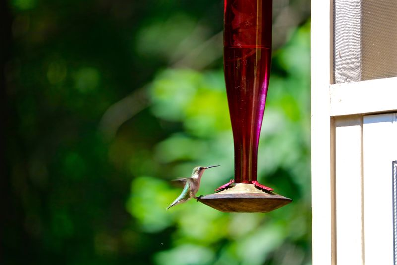 Let's Be Still Vertebrate Animals In The Wild Animal Themes Animal Wildlife Bird Animal One Animal Bird Feeder Outdoors Hanging Green Color Perching Close-up Window Hummingbird Nature