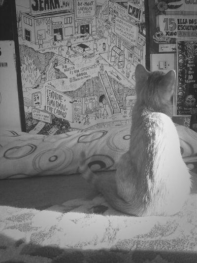 Catcatcat Cats AnimaLs <3 Blackandwhite