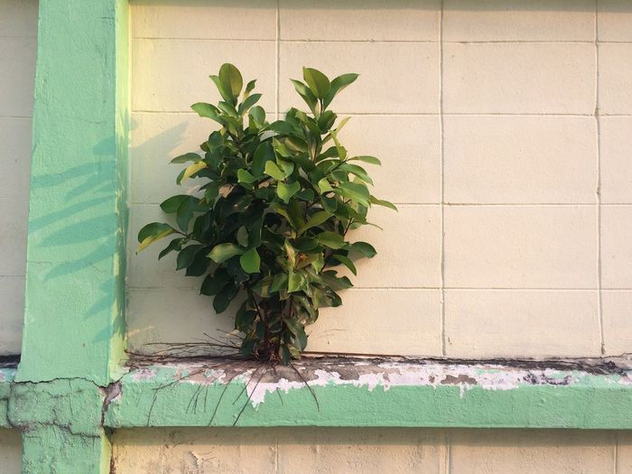 Close-up of plant on wall