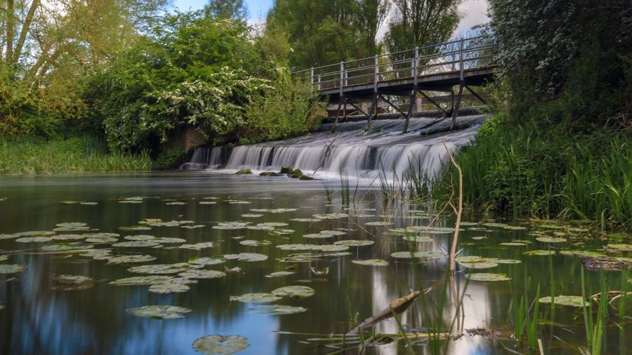 Water Plant Tree Nature Beauty In Nature Reflection Growth Scenics - Nature Day No People Built Structure Green Color River Motion Tranquility Bridge Flowing Water Waterfront Outdoors Bridge - Man Made Structure