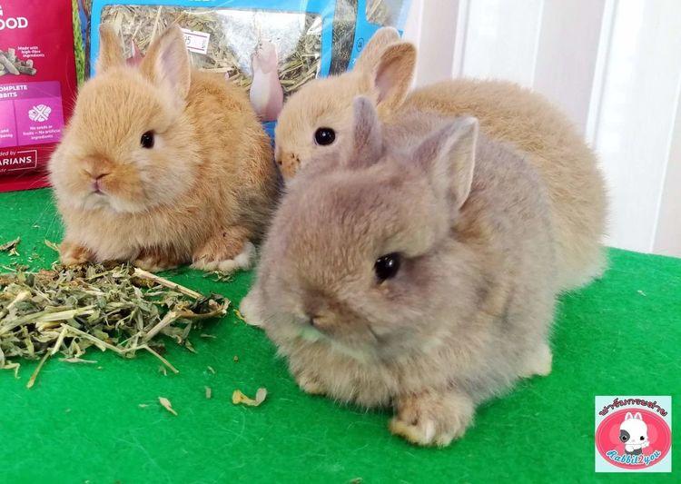 Rabbit Cute Pets Cute Rabbit Cute Rabbit ,bunny Bunny  EyeEm Selects Pets Hamster Looking At Camera Hedgehog Portrait Animal Themes Close-up